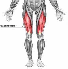 大腿四頭筋-画像